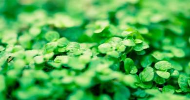 зелень, растения