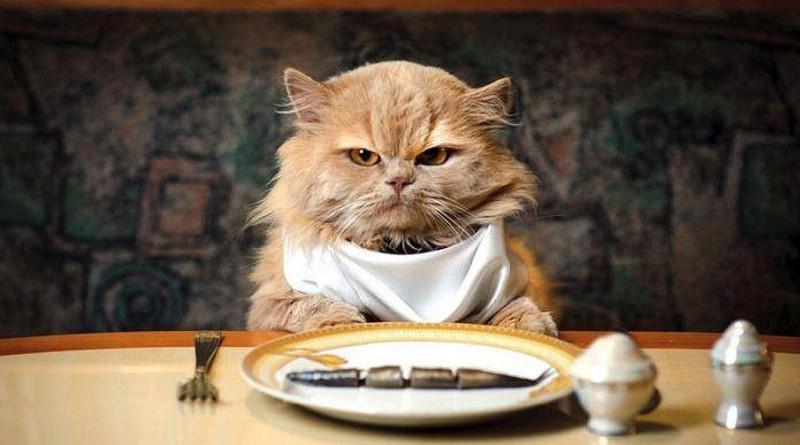 кошка еда