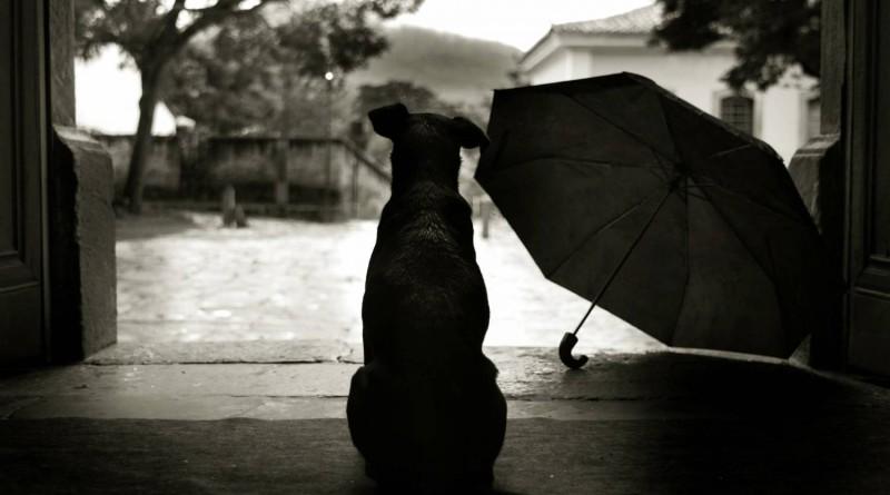 собака, зонт