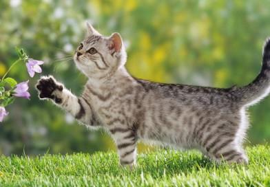 Чтобы понять кошку, нужно думать как кошка: мебель, дружелюбная к домашним питомцам