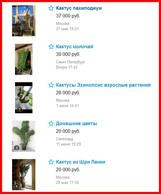 hobiz кактус