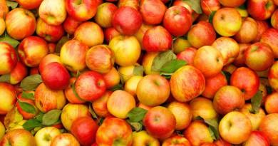 бизнес идея - фруктовый сад