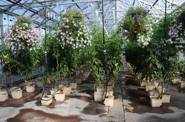 Выращивание растений при помощи гидропоники