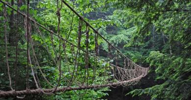 лес веревка ущелье