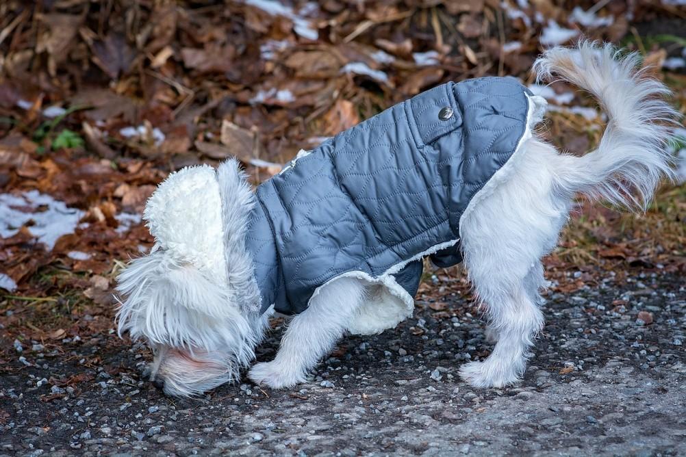 одежда собака