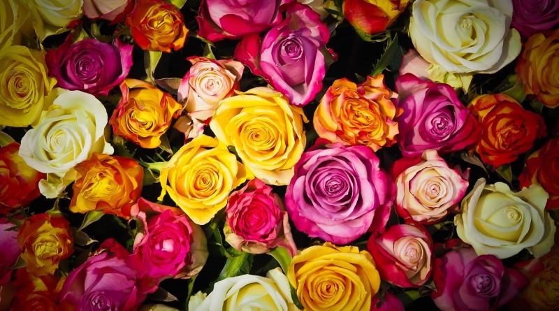 roses-hobiz.ru-1229148_1280