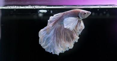 рыбка аквариум