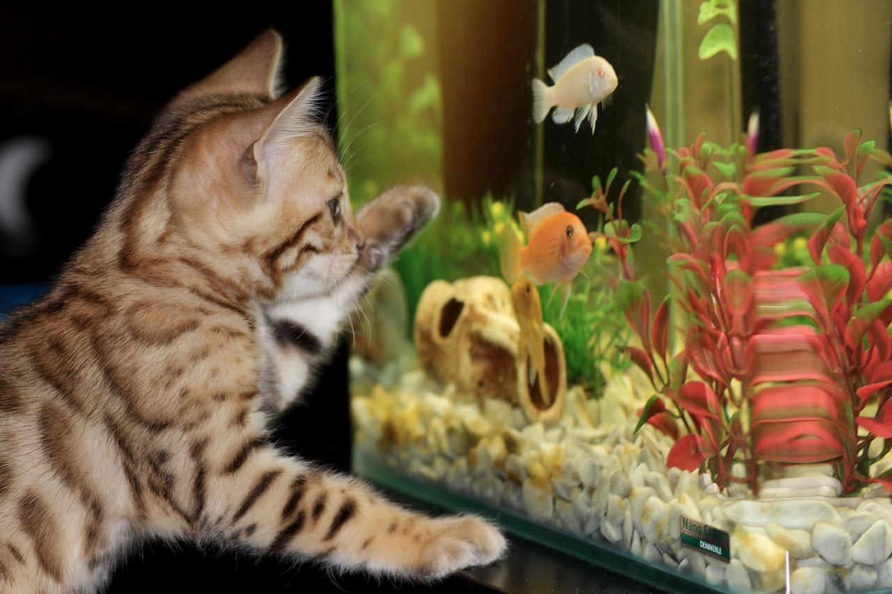котенок аквариум рыбки