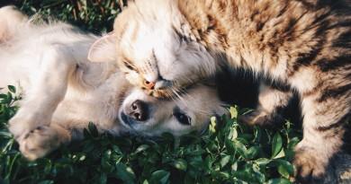 кот собака дружба
