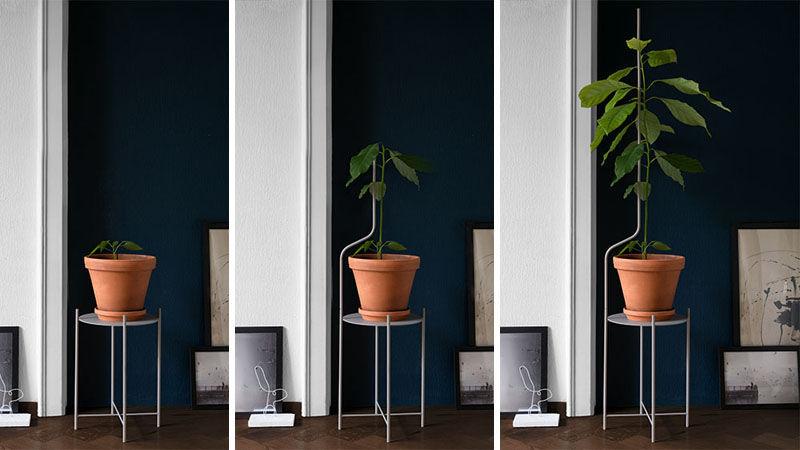 liana-plant-stand