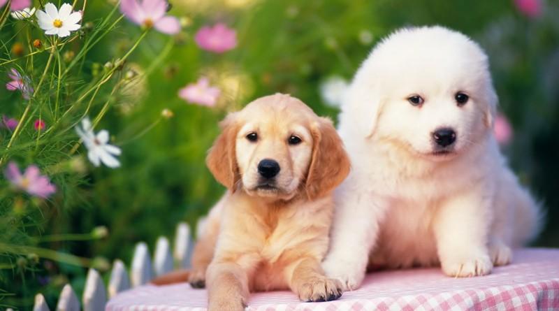 Бизнес идеи для собак бизнес планы теле2
