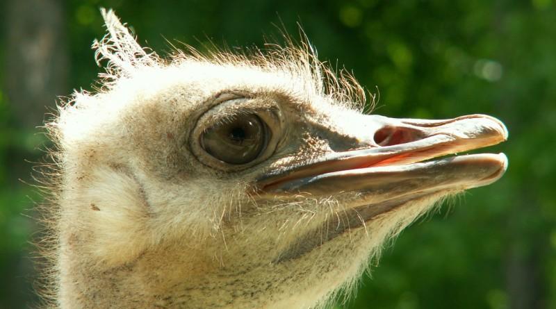 Бизнес идеи страусы отзывы самса бизнес план