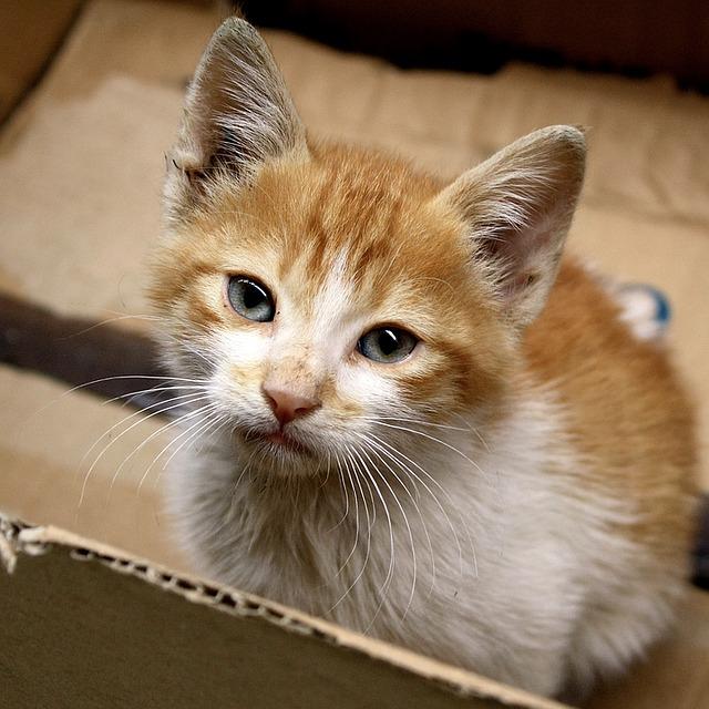 Изображение - Как открыть контактный зоопарк cat-hobiz-1072241_640