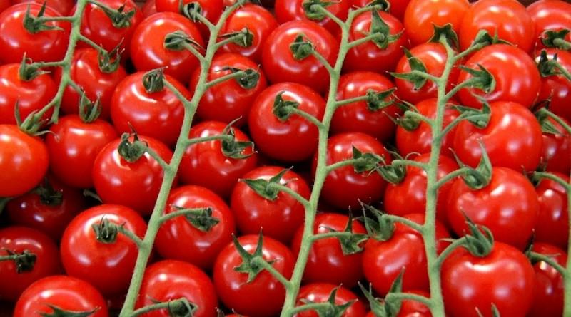 Изображение - Выращивание томатов как бизнес cherry-tomatoes-hobiz.ru-2340238_1280-800x445