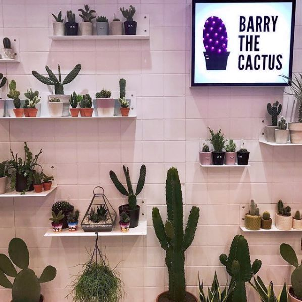 barry-the-cactus